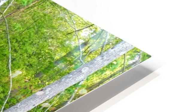 Swamp in Carolina HD Sublimation Metal print