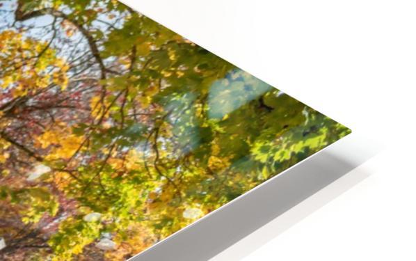 DSC_7158 HD Sublimation Metal print