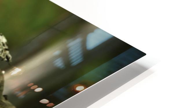 Chipmunk on tree HD Sublimation Metal print