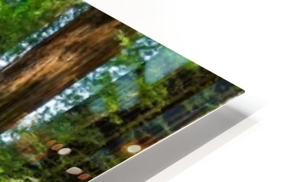 Redwood National Park HD Sublimation Metal print