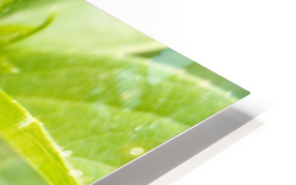 A.P.Polo - Karel Gott HD Sublimation Metal print