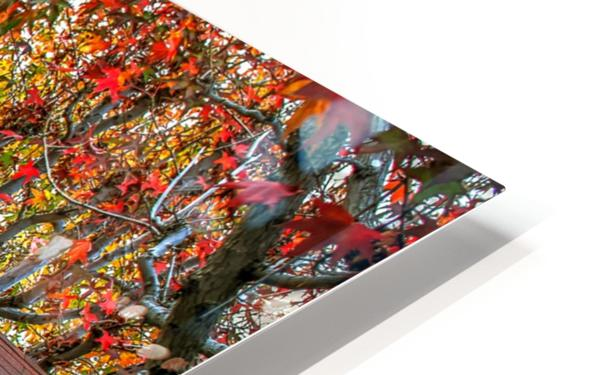 Fall in the city HD Sublimation Metal print