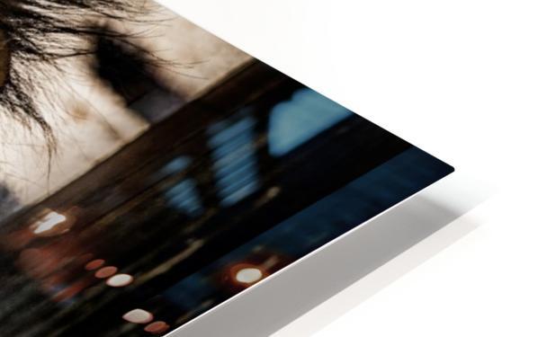 A Regal Lion HD Sublimation Metal print