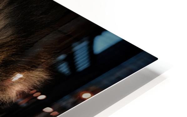 A Lions Profile HD Sublimation Metal print