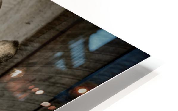 Baby Rhino HD Sublimation Metal print