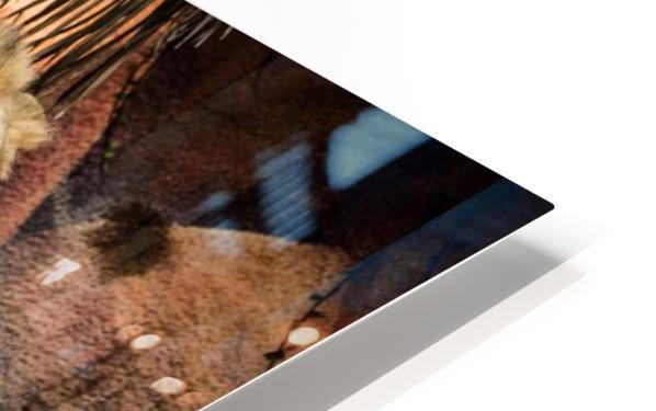 The Loving Lion Couple HD Sublimation Metal print