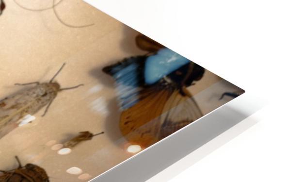 Biodiversity HD Sublimation Metal print