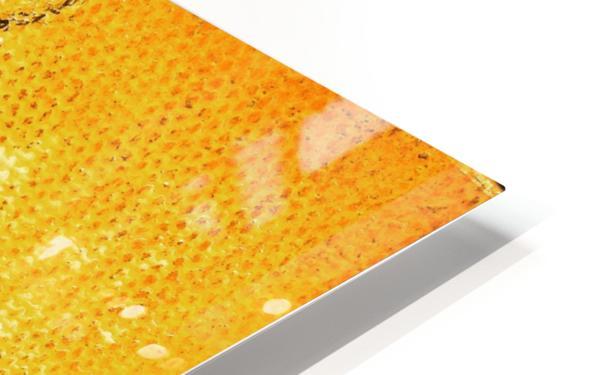 Bottled Gold Swan HD Sublimation Metal print
