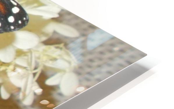 DSCN0904 HD Sublimation Metal print