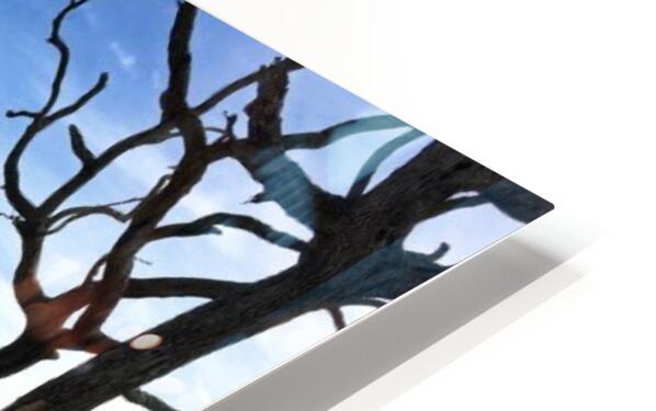 Driftwood Beach Panorama Shadows HD Sublimation Metal print