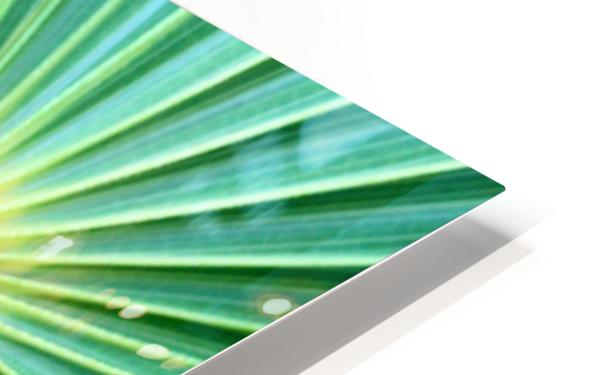 Spreading the Green HD Sublimation Metal print