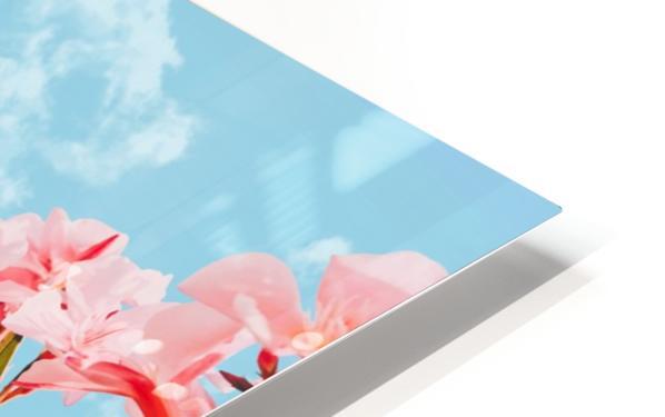Blush Blossom II HD Sublimation Metal print