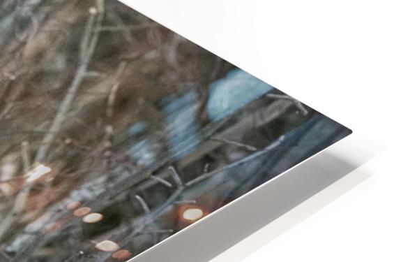 Mr. Moose HD Sublimation Metal print