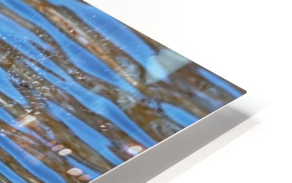 Flaunting The Blues HD Sublimation Metal print