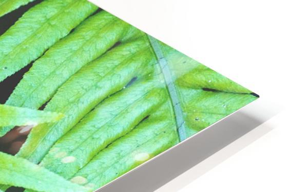 Fern Leaves HD Sublimation Metal print