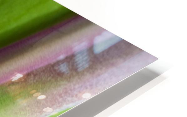 Spider Agave Stalk HD Sublimation Metal print