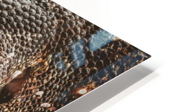 The Komodo Dragon  HD Sublimation Metal print