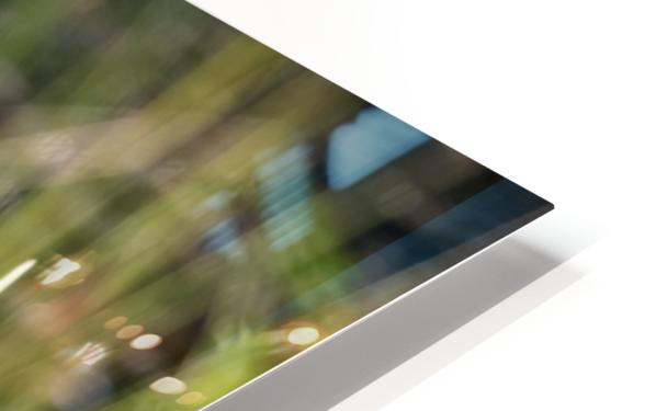 Yellow crowned Night Heron at Brick Pond Park 4690 HD Sublimation Metal print