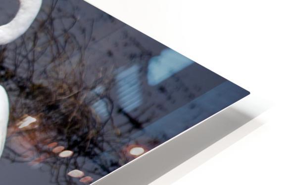 White Egret Reflection HD Sublimation Metal print
