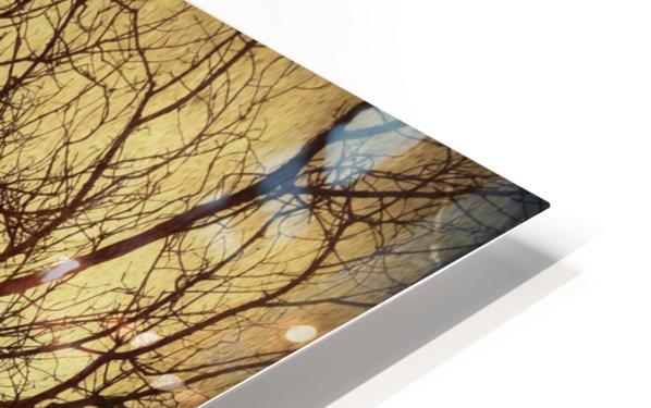 Ramifications HD Sublimation Metal print
