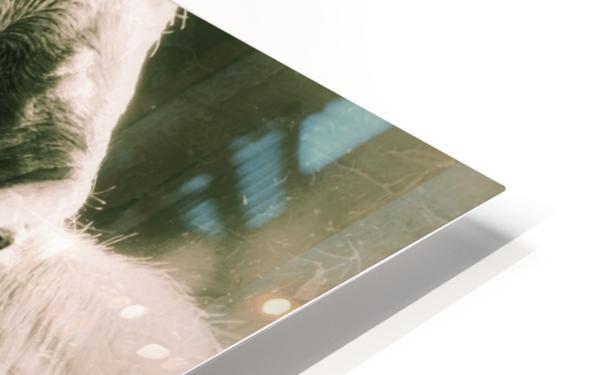 Gitane HD Sublimation Metal print