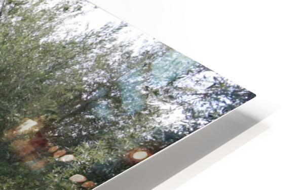 Olive Orchard In Spring HD Sublimation Metal print