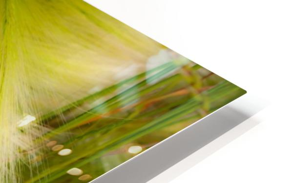 Grasses Of Summer HD Sublimation Metal print