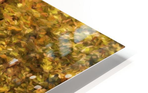 Autumn Path 2 HD Sublimation Metal print