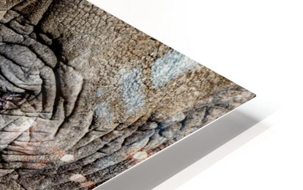 Elephant Close Up HD Sublimation Metal print