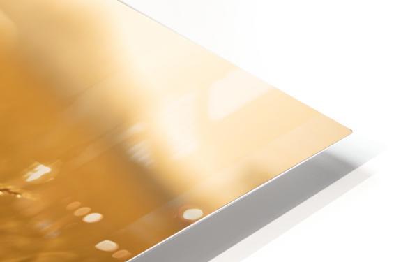 Golden Hour Field HD Sublimation Metal print
