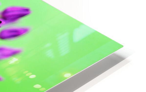 Neon Allium HD Sublimation Metal print
