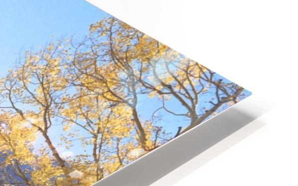 Sunshine Peak through the Aspen HD Sublimation Metal print