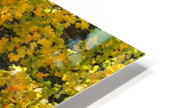 AUTUMN 02 HD Sublimation Metal print