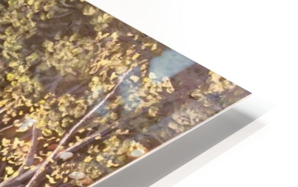 Forest HD Sublimation Metal print