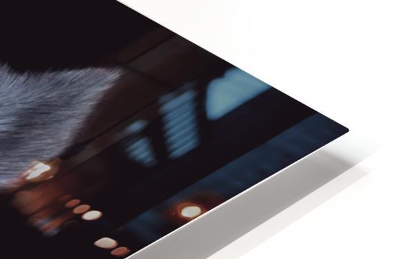 HUSKY_COLOR PENCIL_65.50X80.50 HD Sublimation Metal print