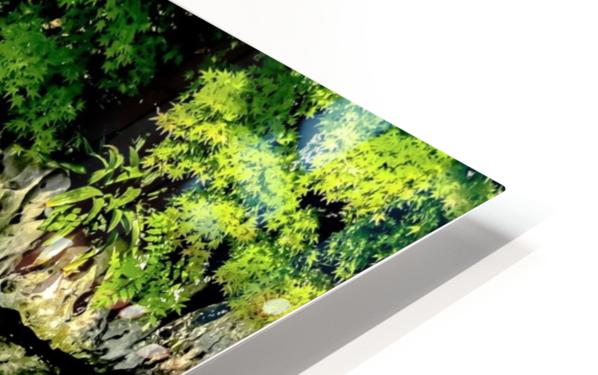 Pound of Color HD Sublimation Metal print