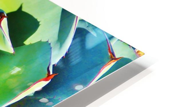 Succulent HD Sublimation Metal print