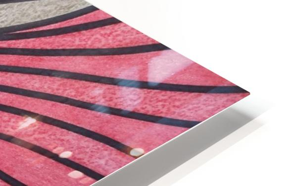Scarlet Bluff  HD Sublimation Metal print