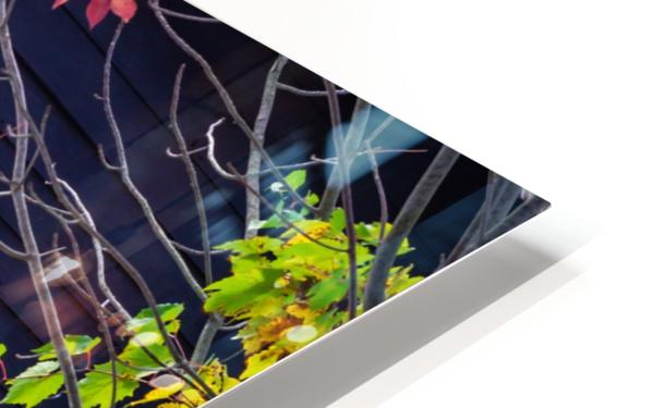 Autumn Window HD Sublimation Metal print