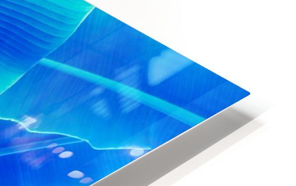 Blue Bananas - Re-Imagined Tropical Biophilia HD Sublimation Metal print