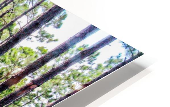 Forest Escape HD Sublimation Metal print