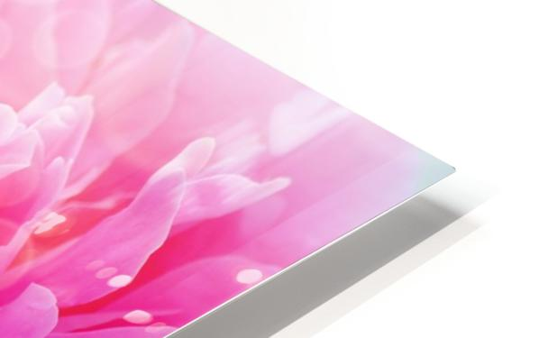 Pink Dream HD Sublimation Metal print