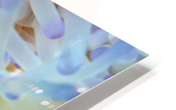 Sea Anemone 5 HD Sublimation Metal print