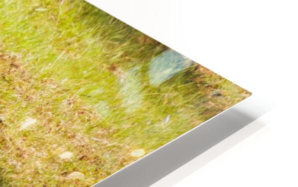 Ball Humpin HD Sublimation Metal print