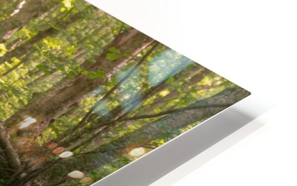 From afar what holds you near HD Sublimation Metal print