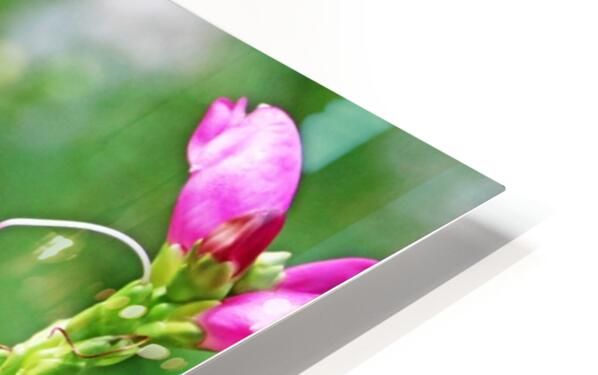 The Lure Of The Pink Turtlehead HD Sublimation Metal print