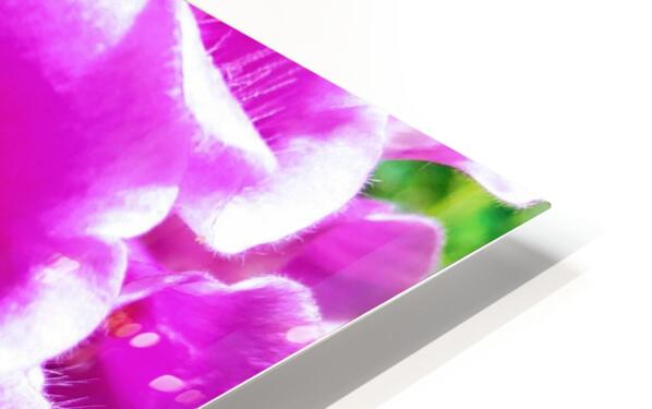 MOUTH OF THE DIGITALIS HD Sublimation Metal print