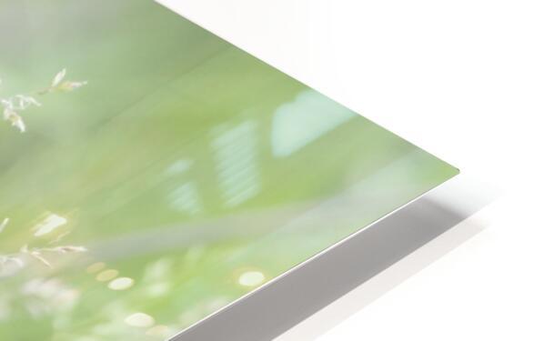 Herbe haute HD Sublimation Metal print