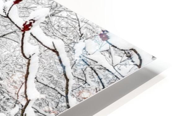 Winter Wonderland HD Sublimation Metal print