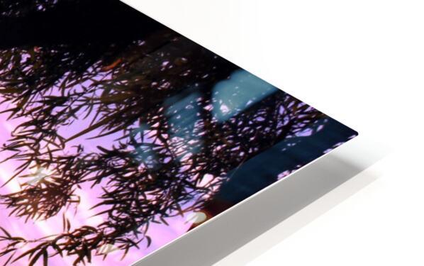 Tamarisk Sunset HD Sublimation Metal print